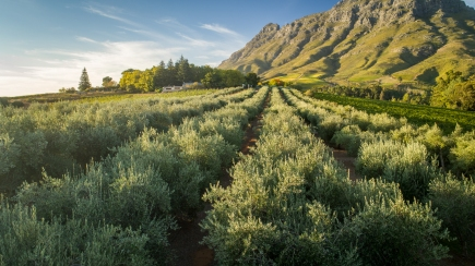 Images courtesy of Tokara